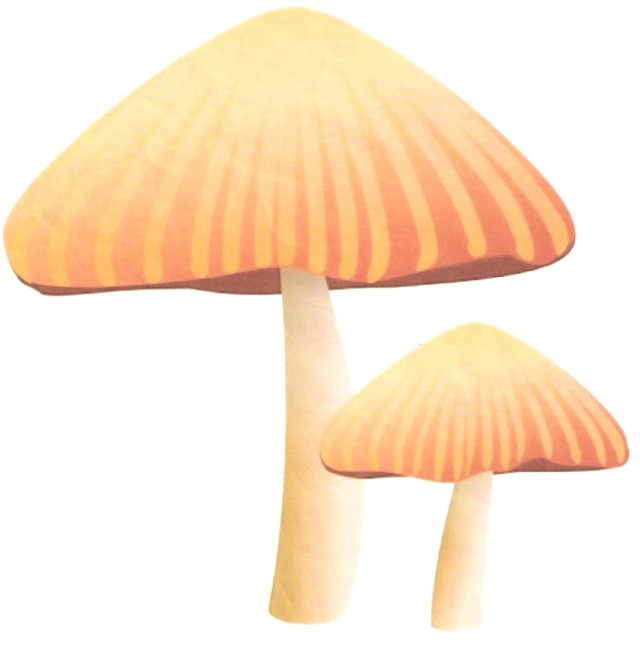 Image used as a backdrop to assist me to create a nice mushroom shaped stitch